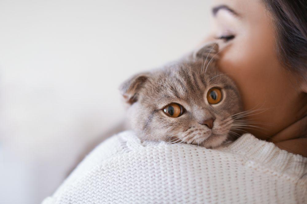 Cómo dar la bienvenida a nuevo gato 5
