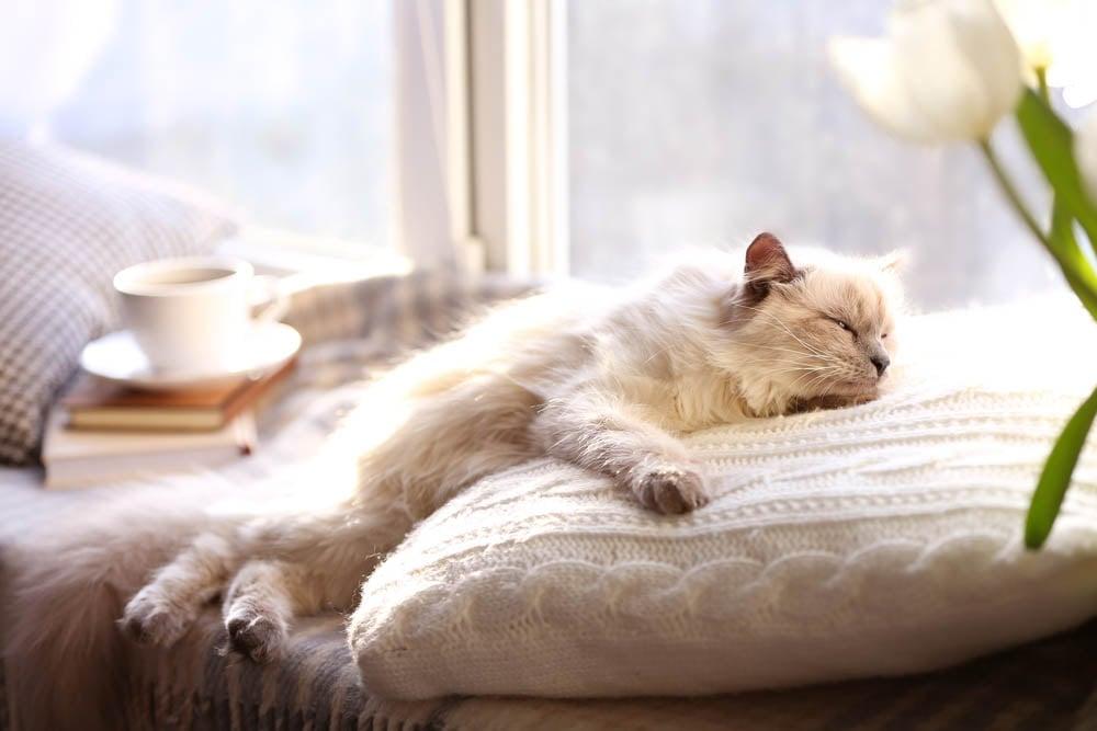 Kuschelige Schlafplätze für Katzen steigern das Wohlbefinden