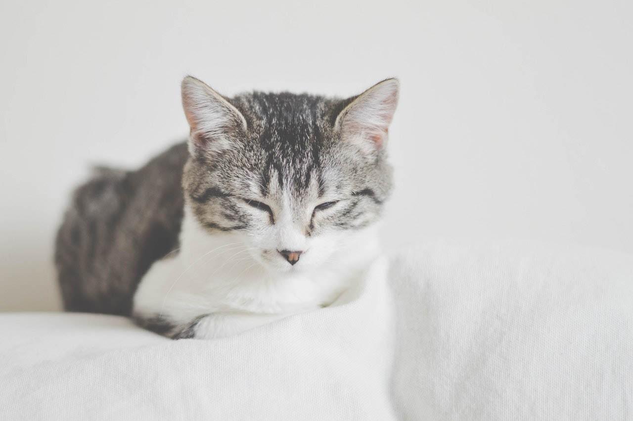 Katze döst auf Couch