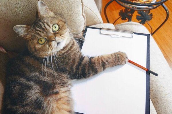 Cat-checklist