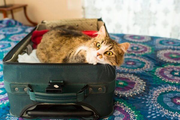 Cat-in-suitcase