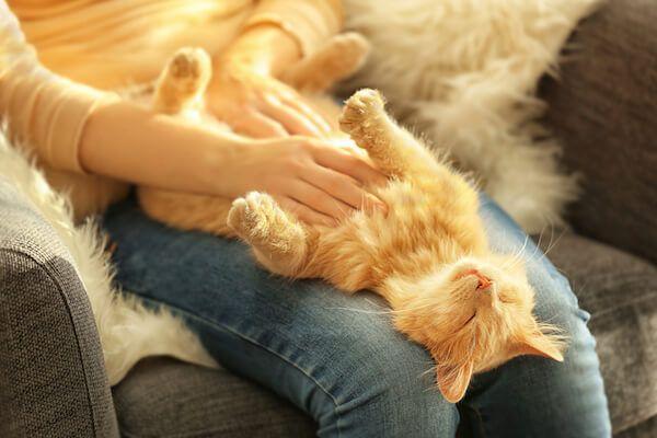 Comfy-cat