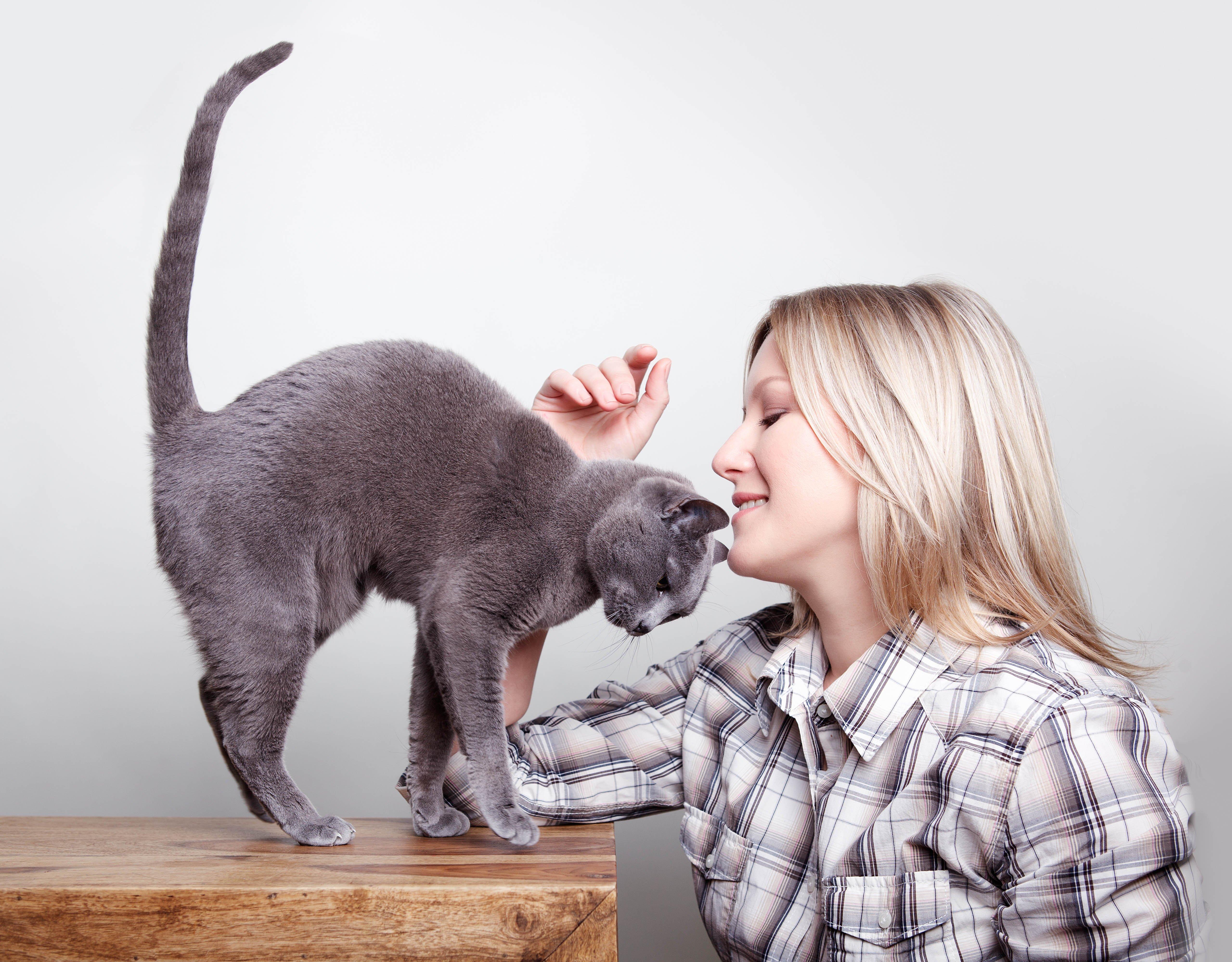 Katze fühlt sich bei Mensch wohl