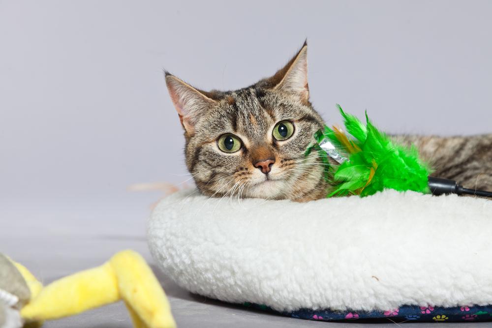 Las residencias de gatos- cómo dejar solo a mi gato 2