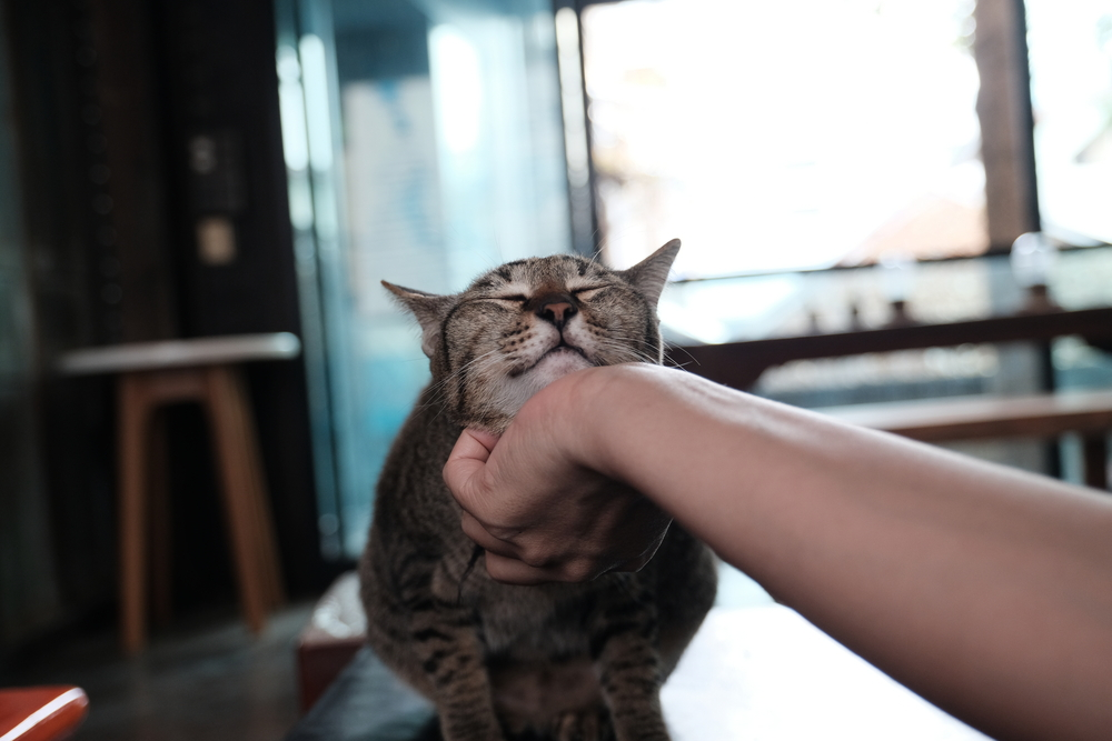 Las residencias de gatos- cómo dejar solo a mi gato