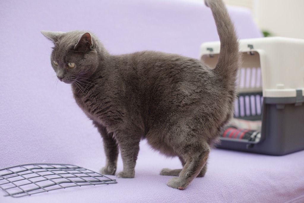 FELIWAY - Cómo podemos ayudar a que tu gato sea el perfecto compañero de viaje 05