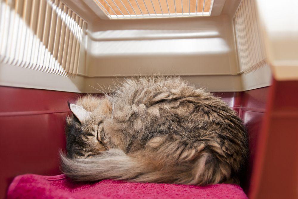 FELIWAY -Cómo podemos ayudar a que tu gato sea el perfecto compañero de viaje 03