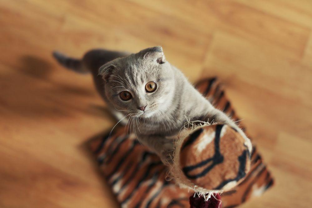 FELIWAY 4 Consejos para que gato no arañe muebles_3