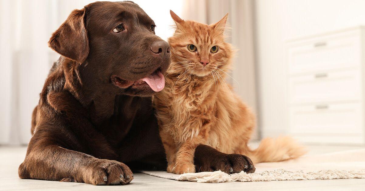 FELIWAY ADAPTIL feromonas en perros y gatos