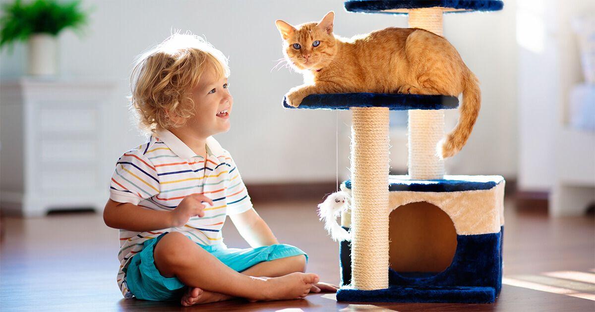 FELIWAY Necesita mi gatito un rascador_1