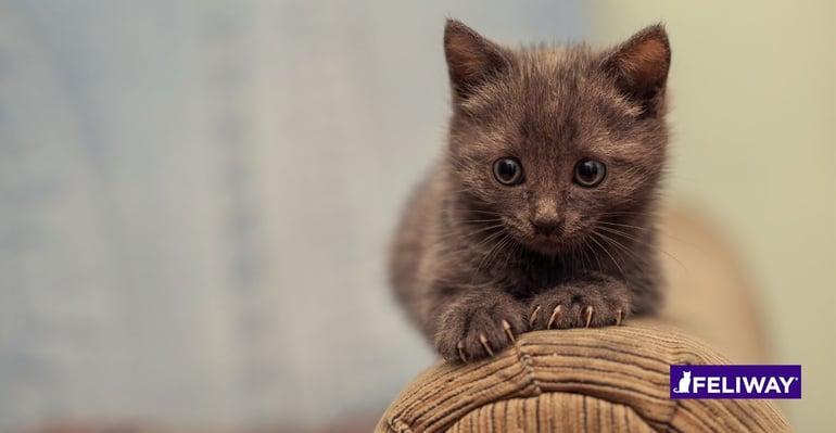 FELIWAY Necesita mi gatito un rascador_2