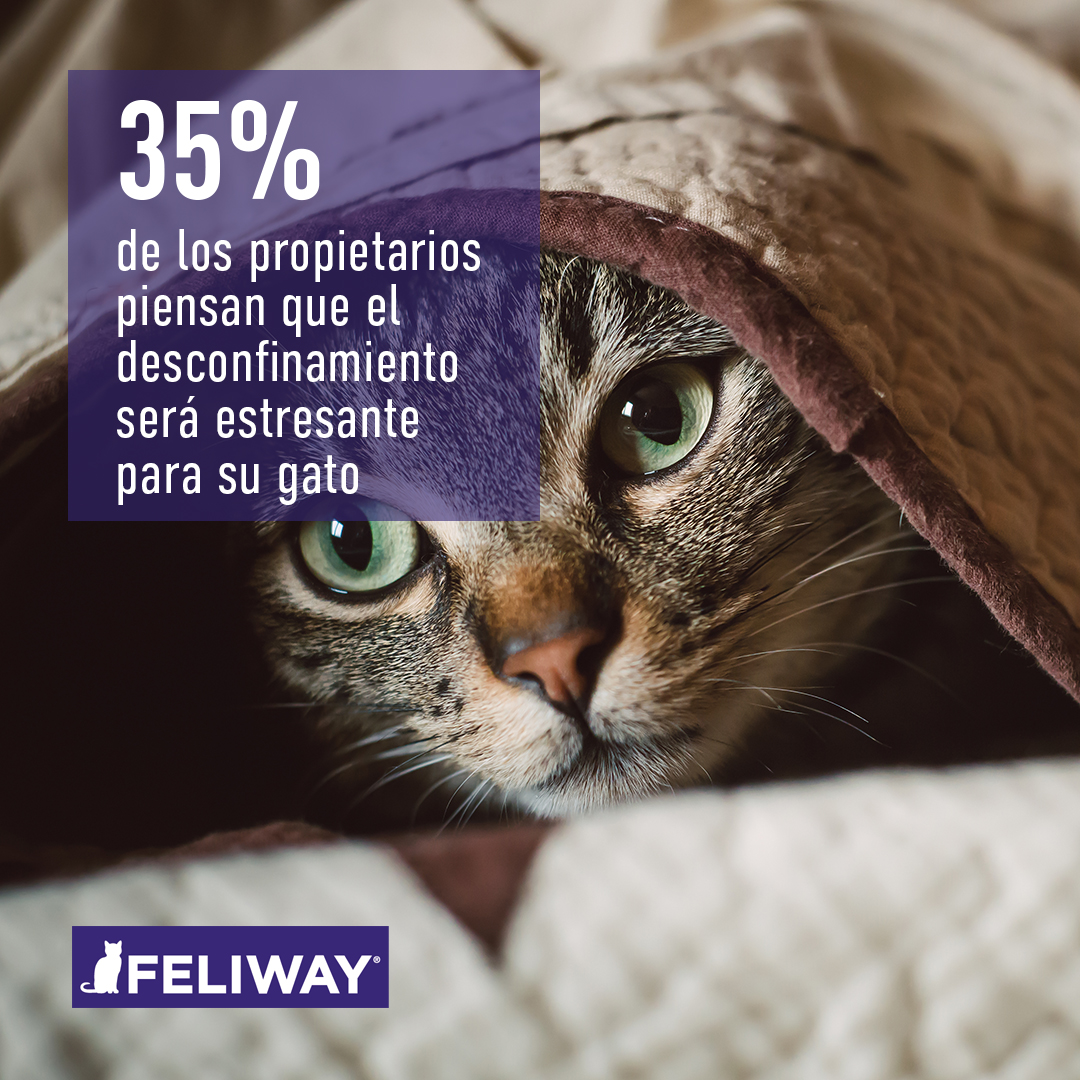 FELIWAY Survey_2.1-tradu