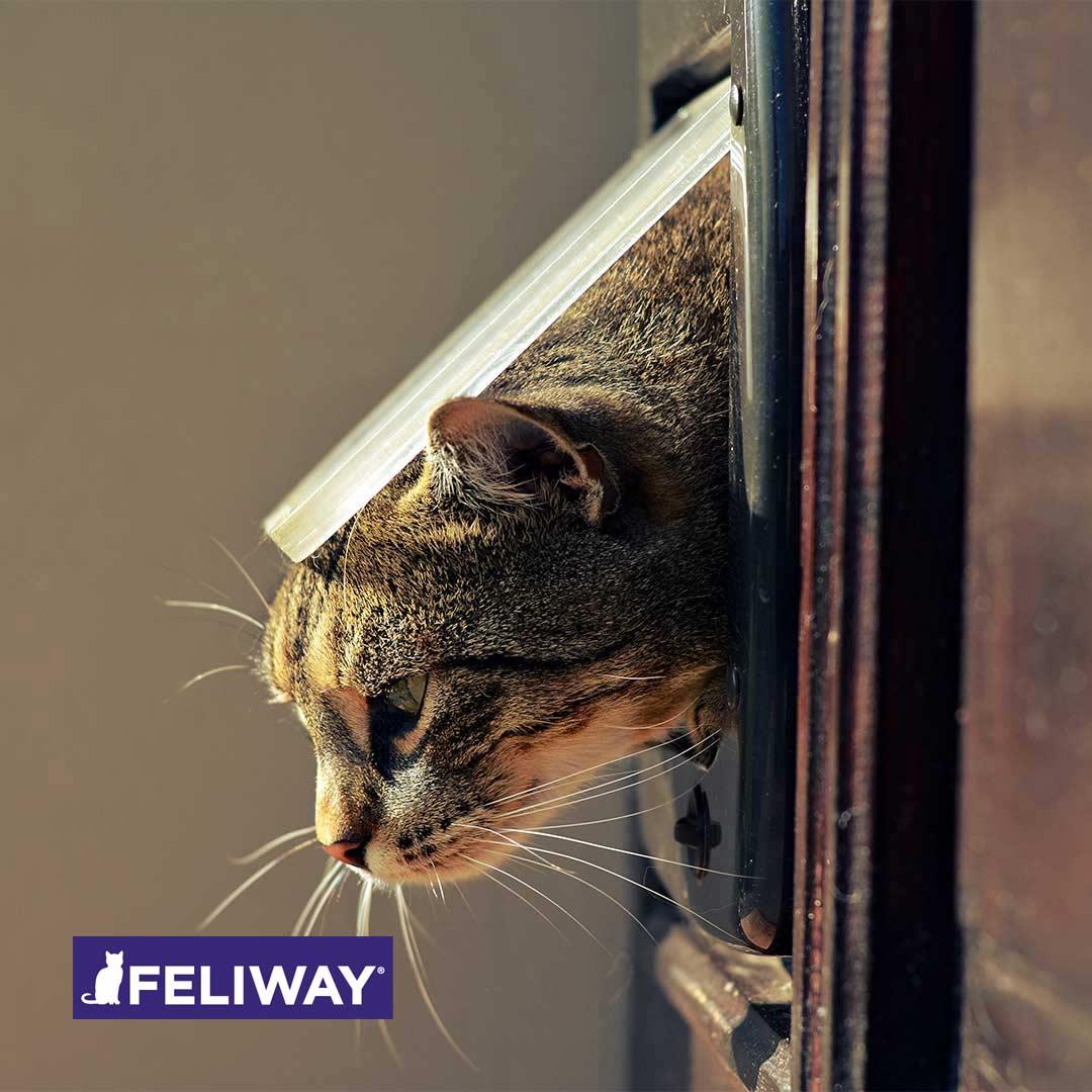 Katze kommt aus Katzenklappe