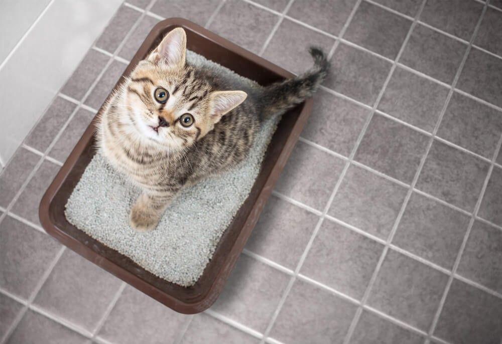 Feliway- Gato no usa arenero de repente3