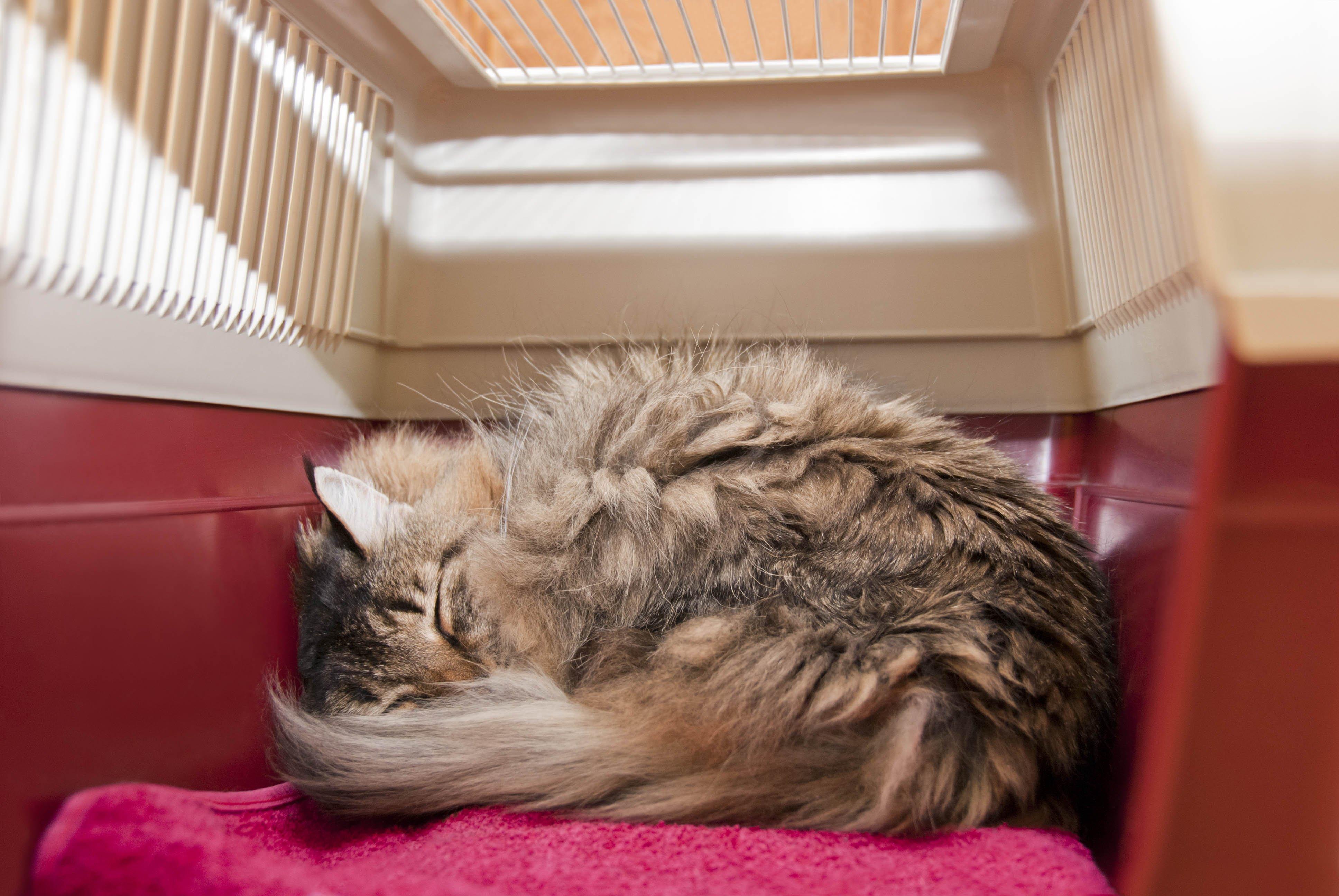 Entspannte Katze in Transportbox