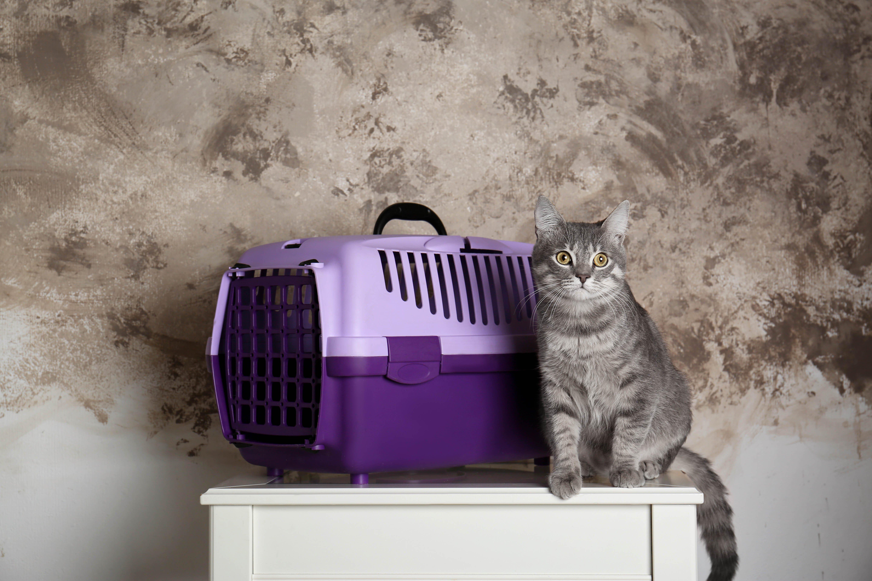 Katze und Transportbox