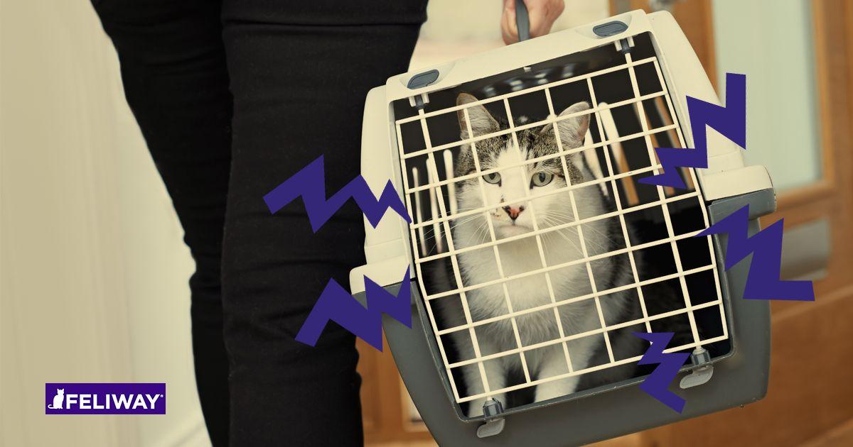 Gato visita el veterinario (2)