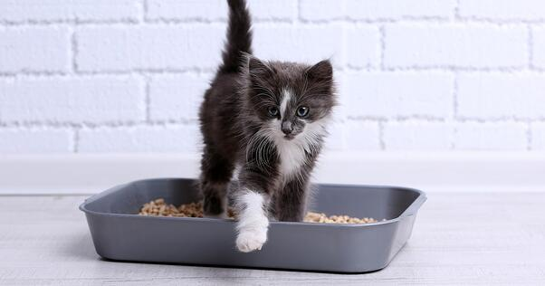 Kitty in litter box