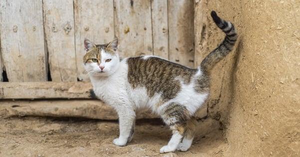 Cat marking territory