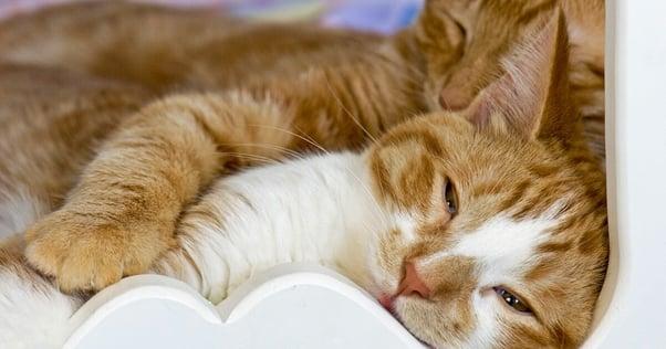 Conflict reduction between cats