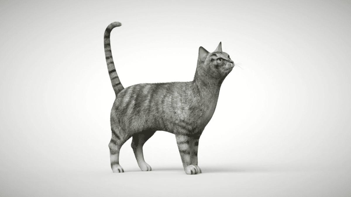 Lorsque votre chat est alerte, ses yeux sont grands ouverts, ses oreilles sont droites et ses moustaches pointées vers l'avant.