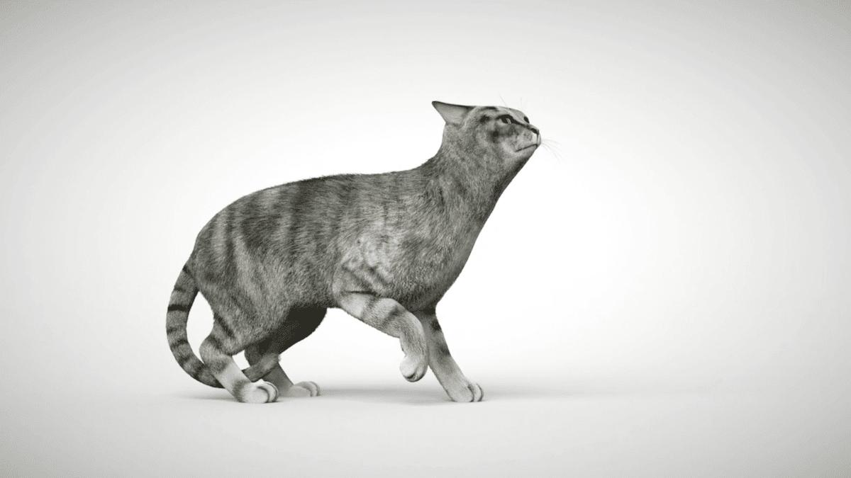 Si votre chat cambre le dos, il se sent peut-être menacé. S'il s'accroupit au ras du sol, il essaie de se faire petit.