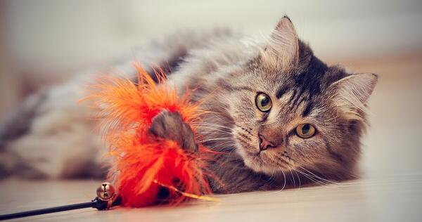 happy cat with red feather