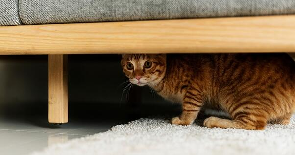 cat hiding under bed