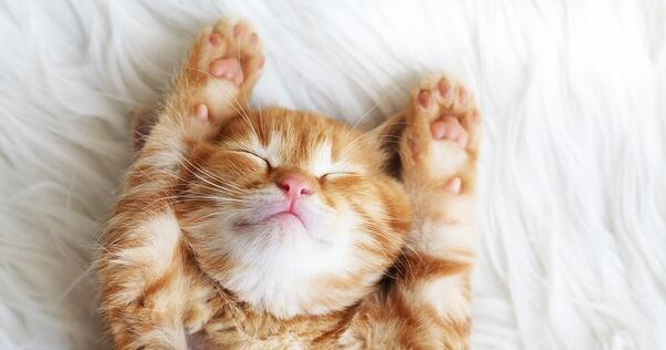 cute ginger kitten asleep on bed