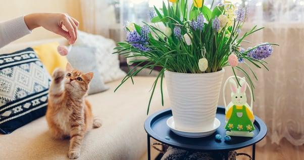 Ostern mit Katze Katze mit bunten Blumen