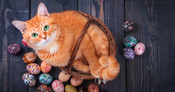 Frohe Ostern mit niedlicher Katze im Korb mit Ostereiern