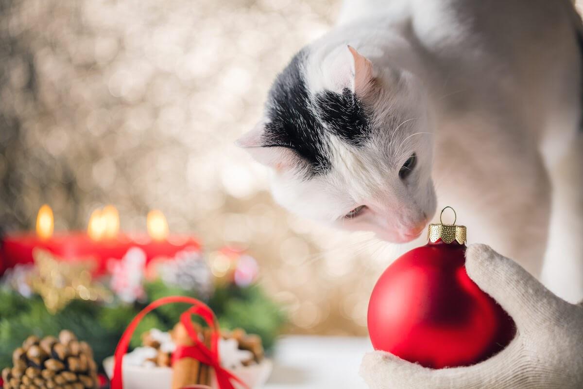 les arbres à chat sont un cadeau parfait pour votre félin