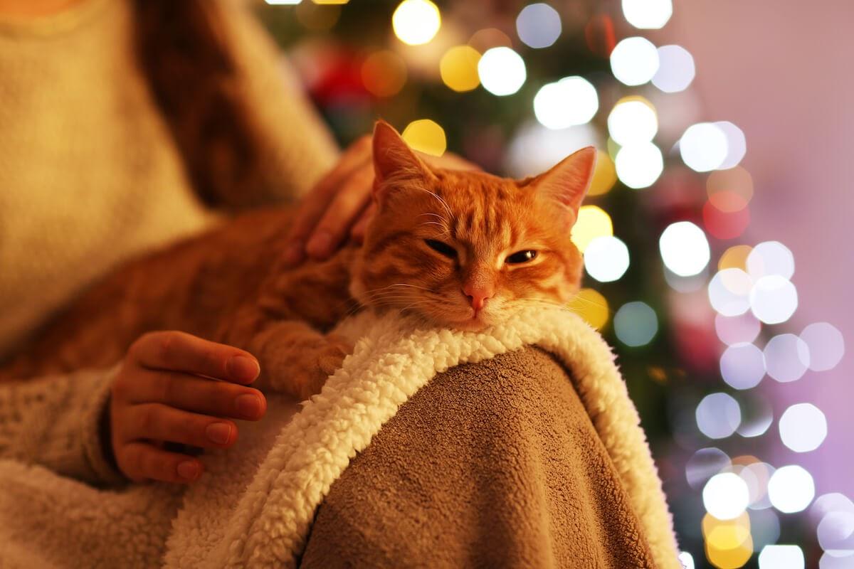offrez des jouets pour stimuler votre chat