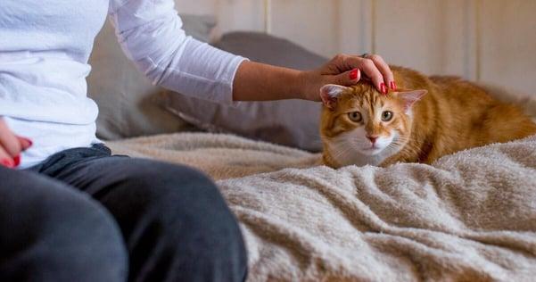 Come aiutare il gattino a rimanere calmo durante i festeggiamenti