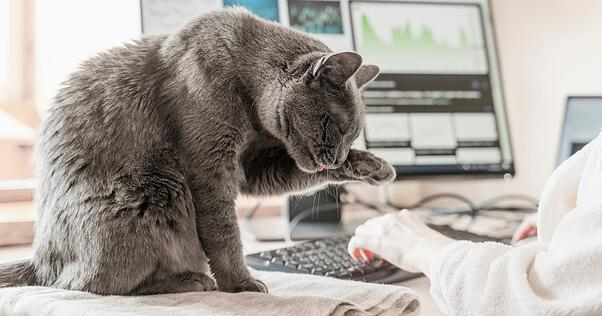 Cat working with owner