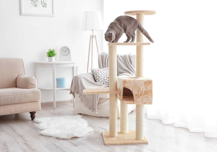 Katze auf Kletterbaum