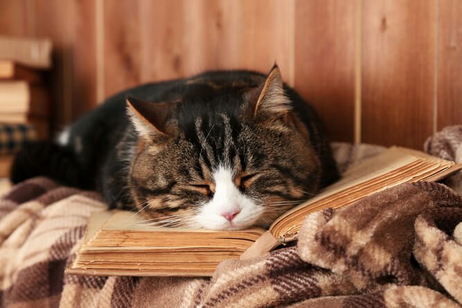 Older kitty sleeping with book