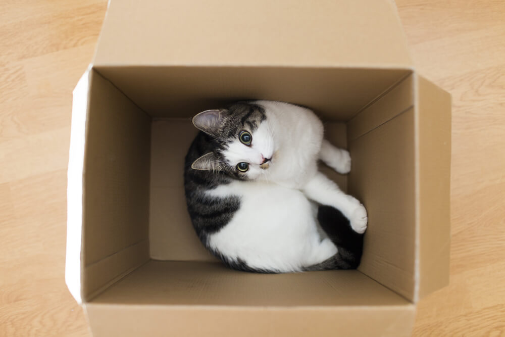 Why do they do that - insist on cardboard boxes so much August Editorial-05