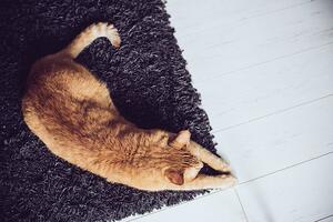 How To Stop Your Cat From Scratching the Carpet_1