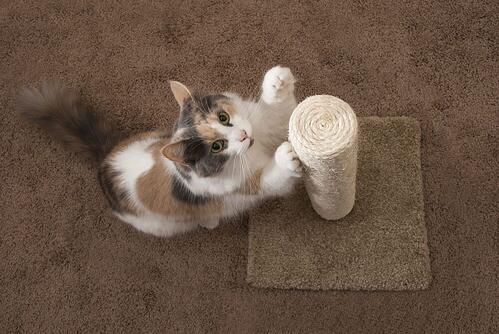 cat scratching on a vertical scratching post