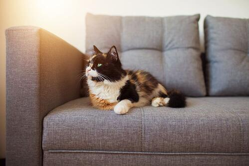 cat lying on a grey sofa