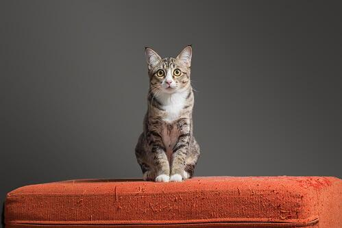 cat sitting on a scratched red sofa