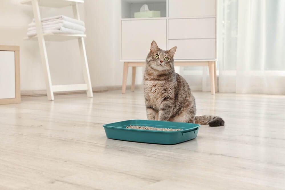 Die wichtigste Grundausstattung für Katzen-Babys die Katzentoilette