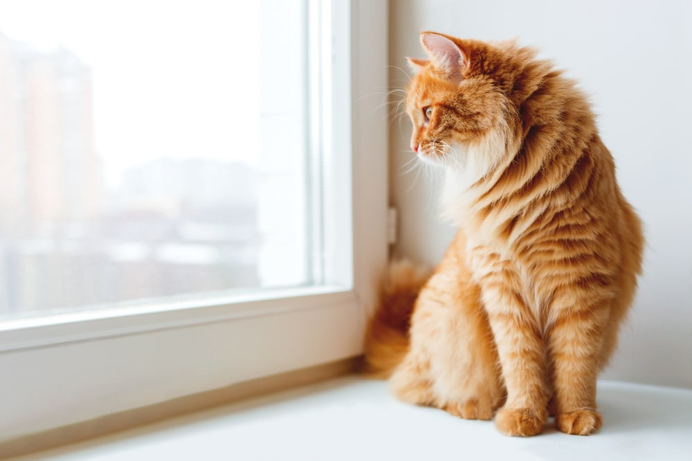 Katzenbeschäftigung: Beobachten aus dem Fenster