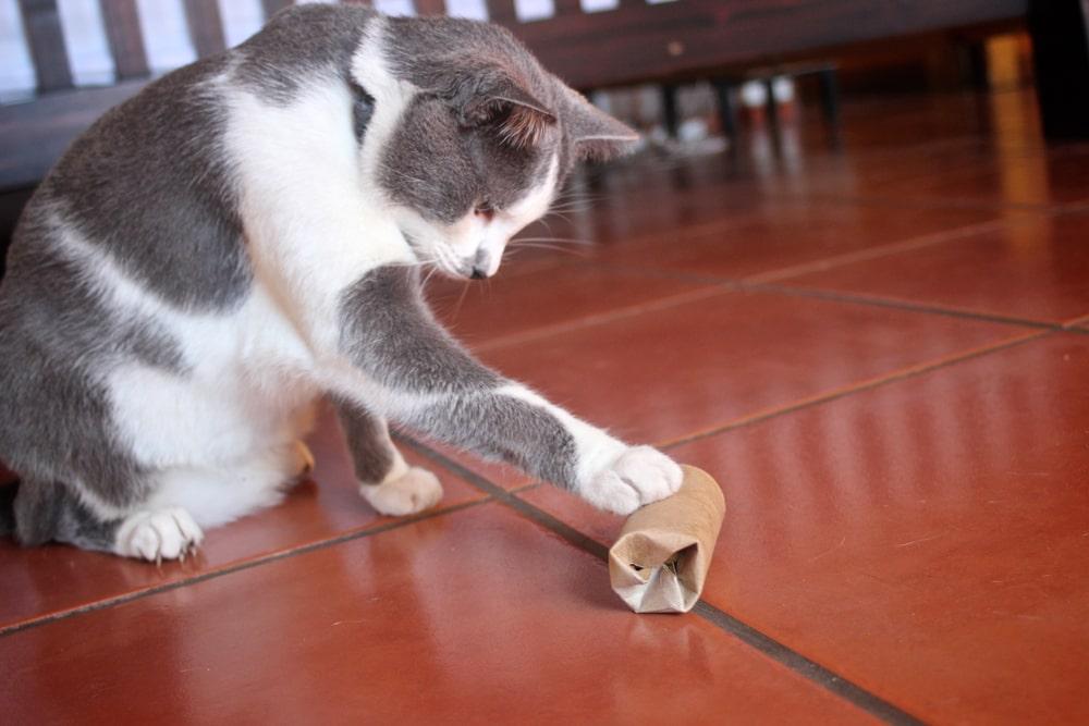 Katzenbeschäftigung: Spielen mit Klopapierrolle