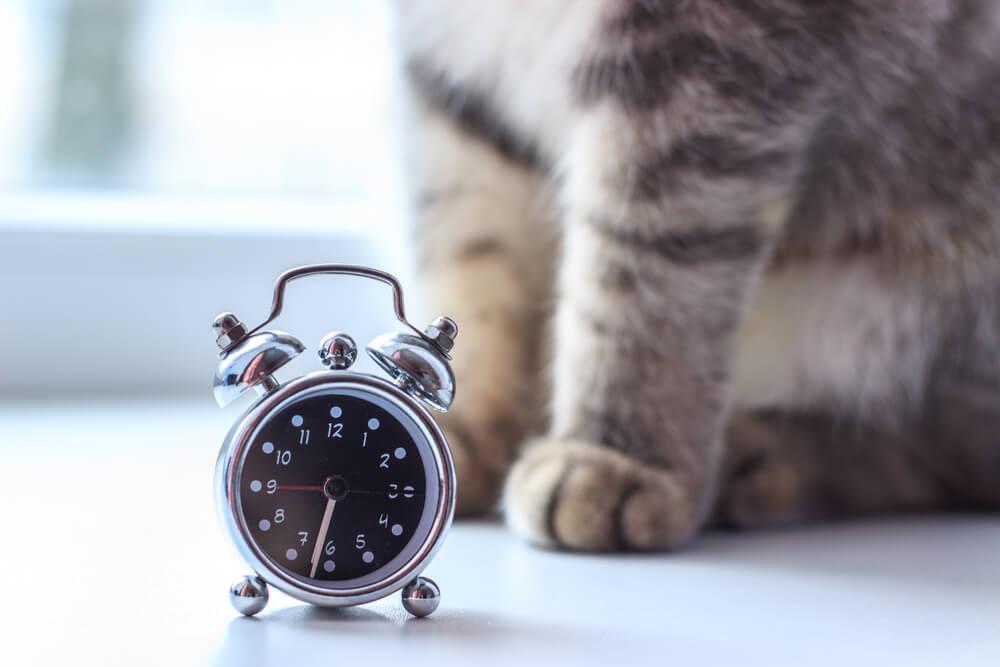 Katzenroutine beibehalten um Stress zu reduzieren
