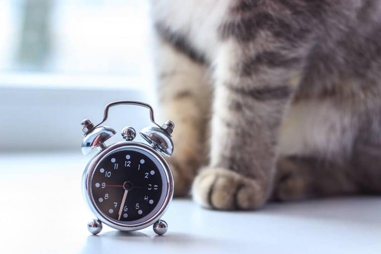 9 goede voornemens voor jou en je kat!