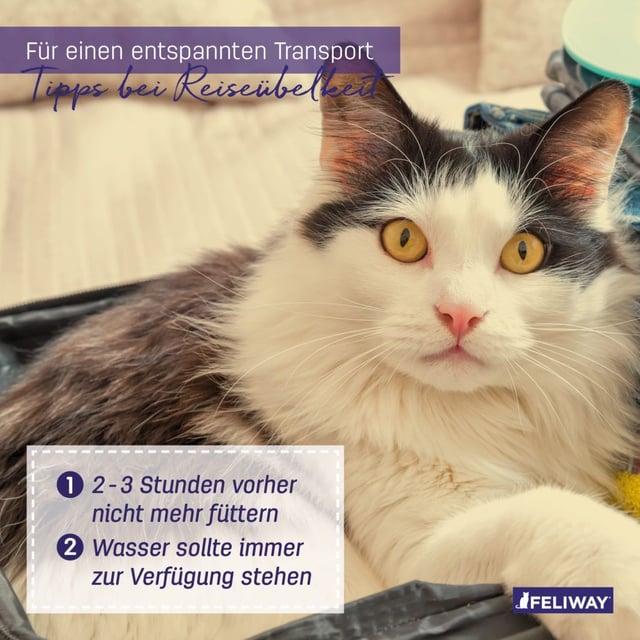 Katze und Tipps gegen Reisekrankheit