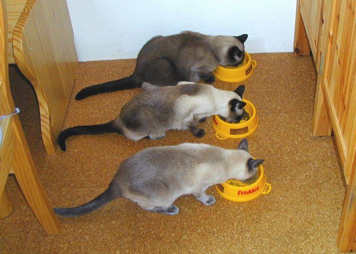 Mehrkatzenhaushalt-10