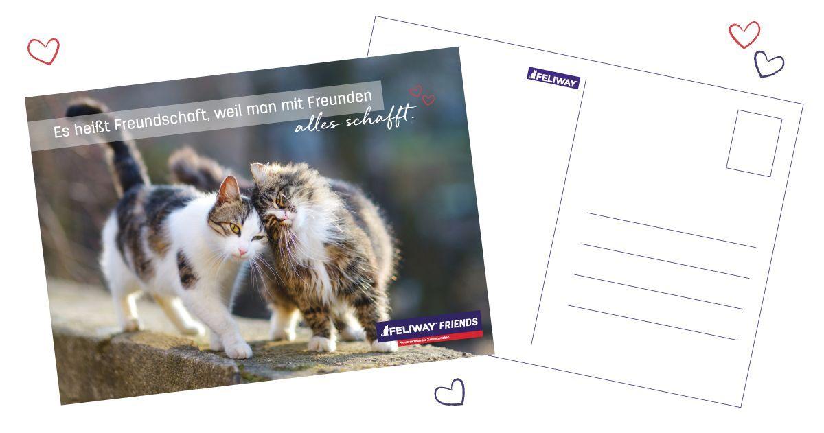 Postkarte für Katzenliebhaber